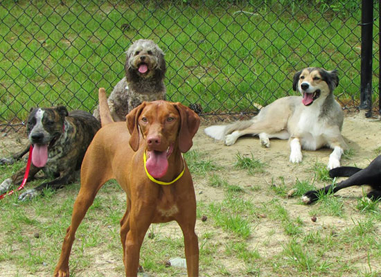 Happy Dogs at Dogwood Doggy Daycare