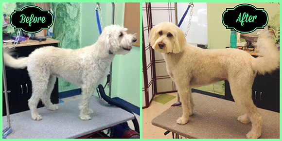 Bay Before & After pet grooming