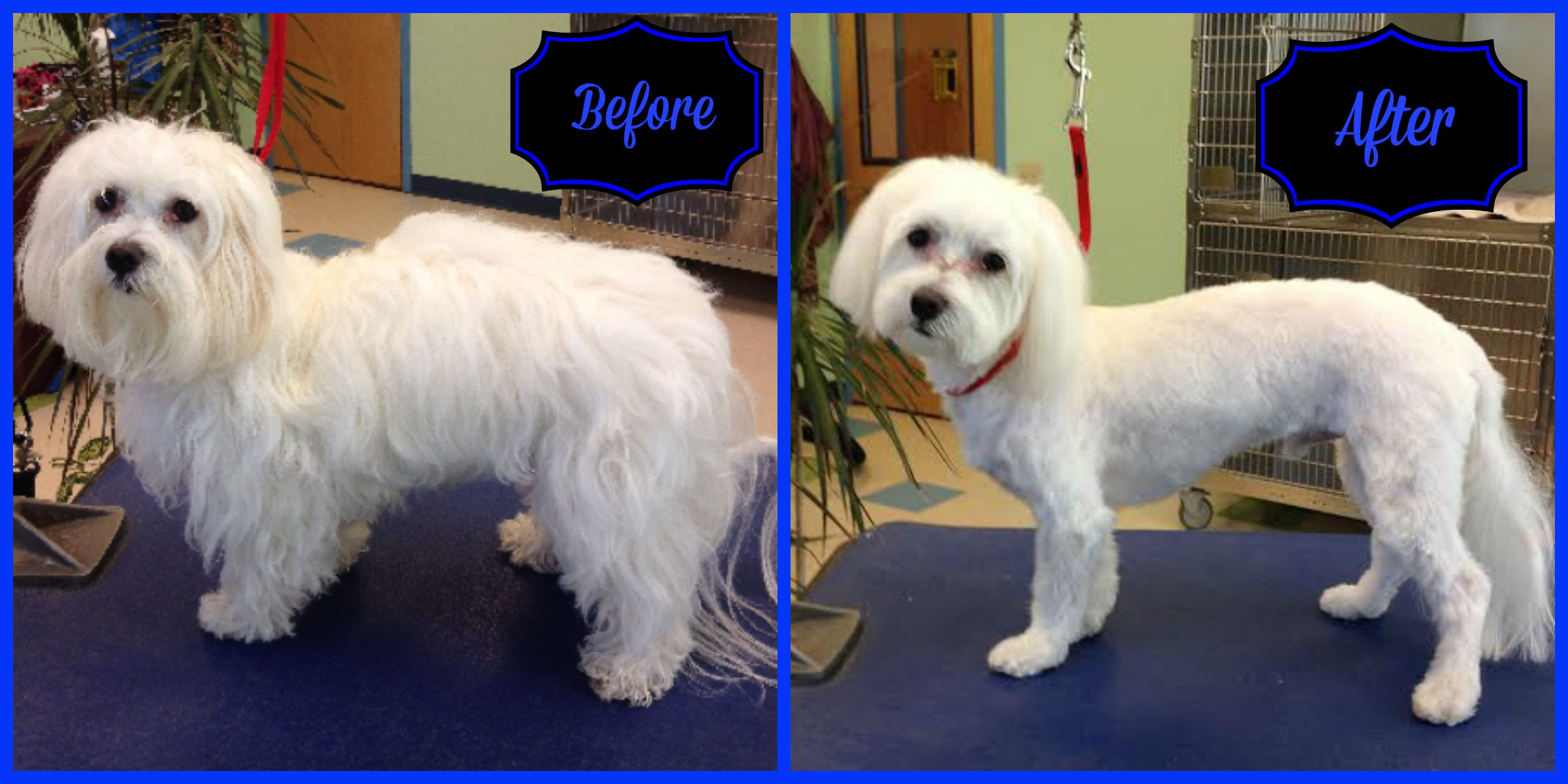 Pet spa dog grooming chapel hill dogwood vet hospital for A family pet salon