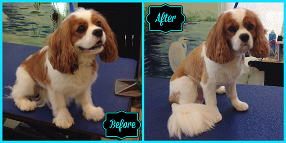 Eddie K Before & After bathing nc
