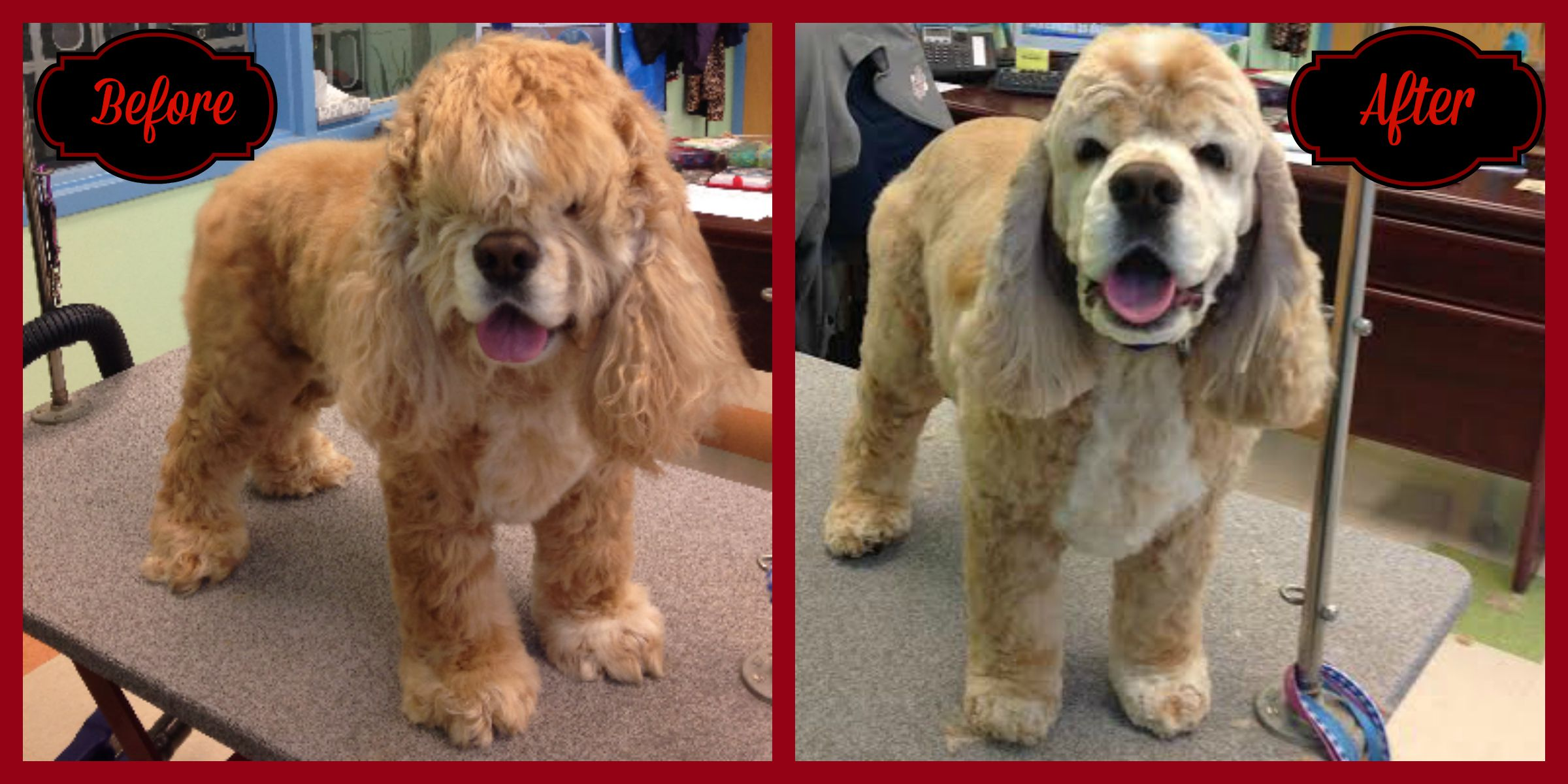 pet spa dog grooming shedding carrboro