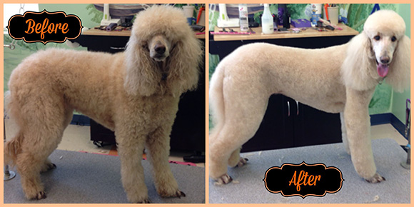 Hayley Before & After grooming nc