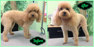Lucy W Before & After