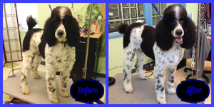 Oreo Before & After Chapel Hill