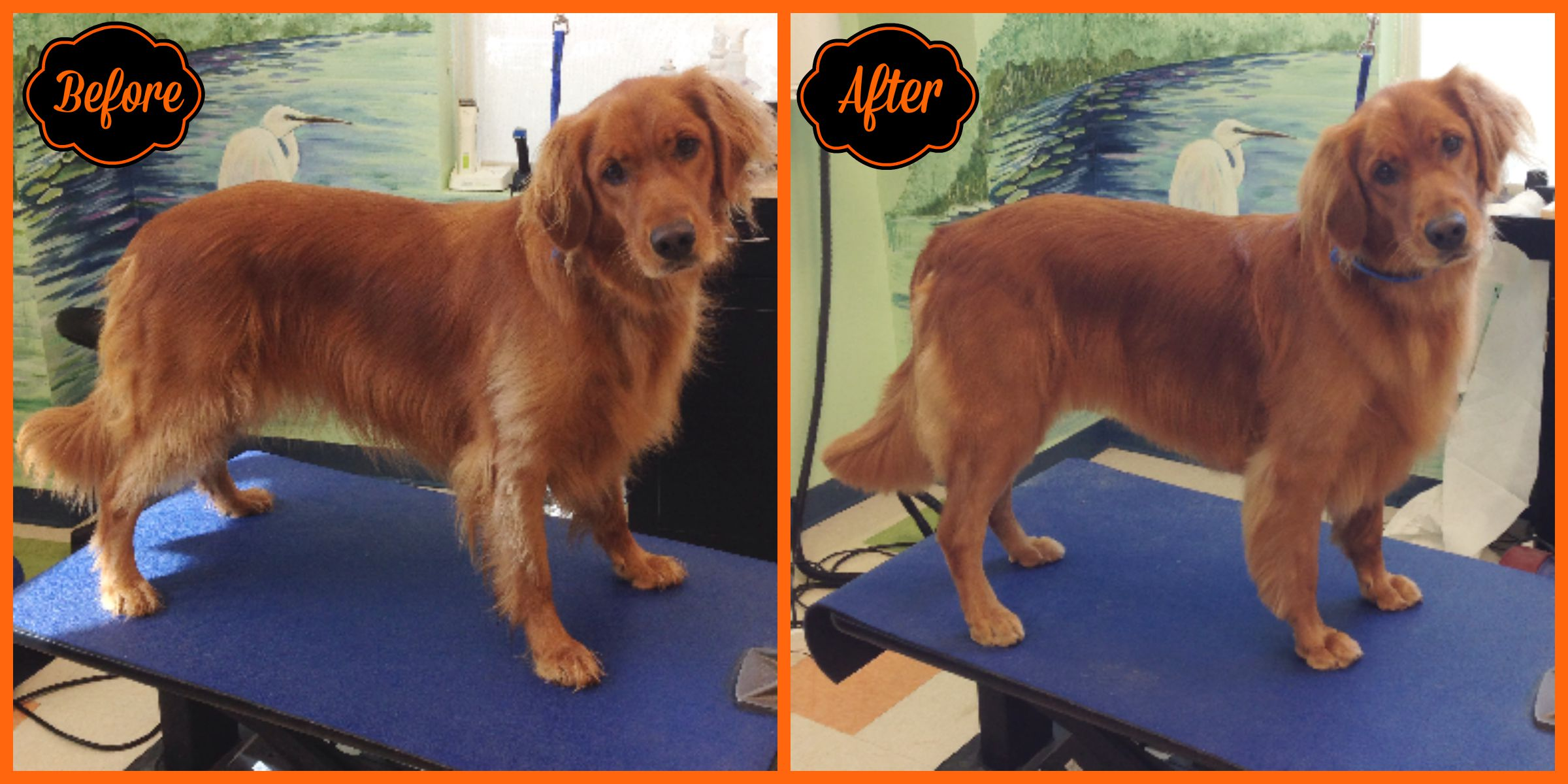 pet grooming pet spa chapel hill