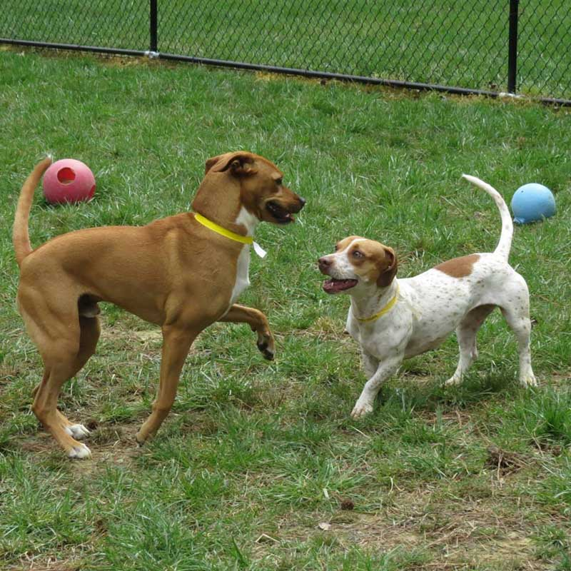 Home Away From Home: Doggy Day Care in Chapel Hill
