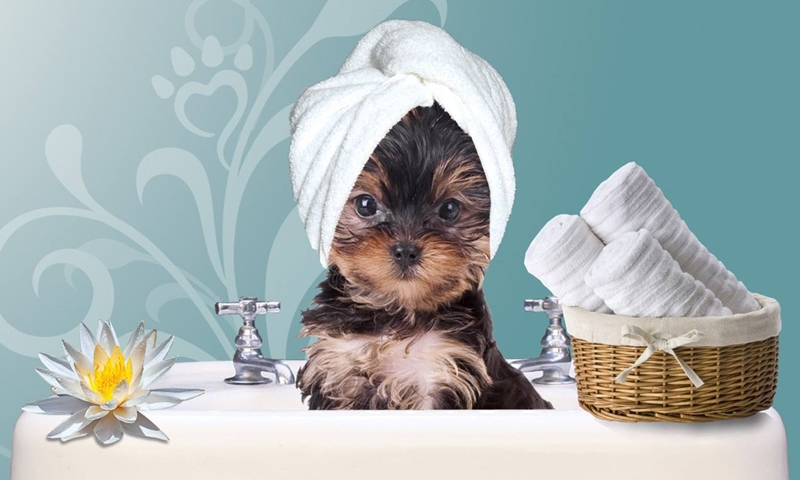 Pamper Your Pet at a Pet Resort—Even When You're Away