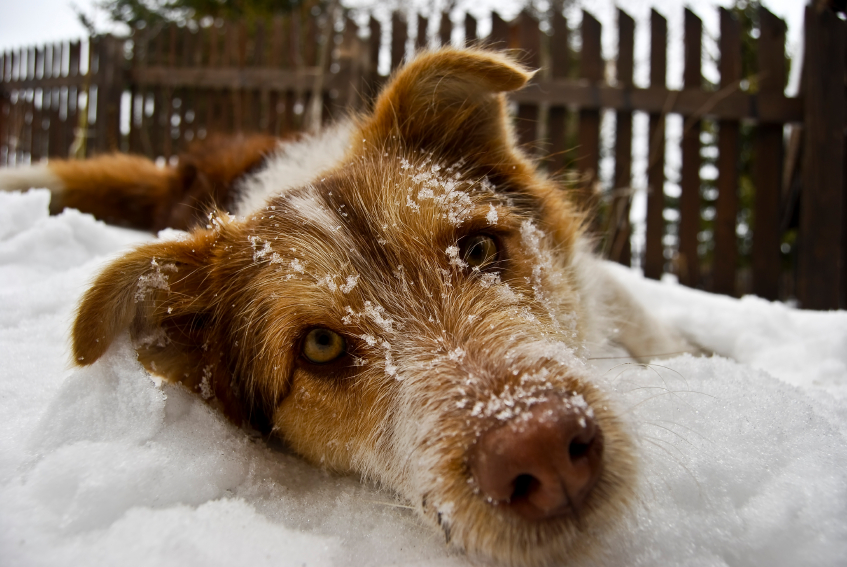 10 Ways To Keep Your Dog Safe This Winter