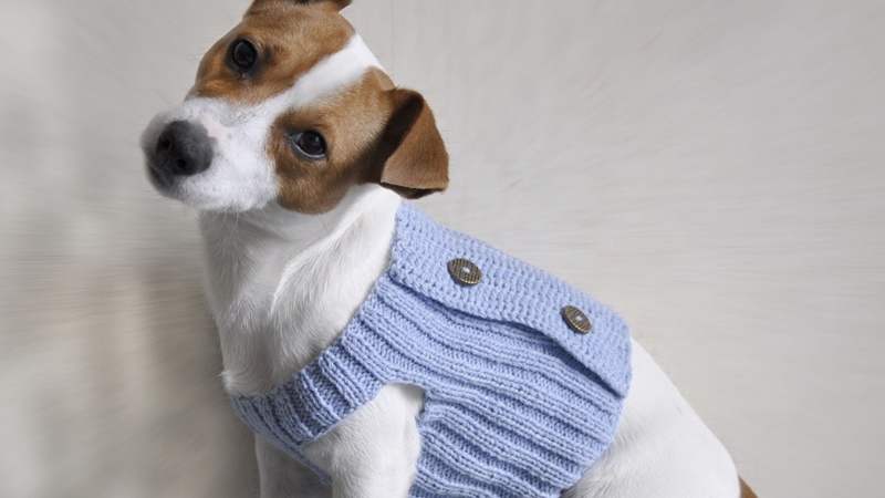 Dog Sweater Dog Daycare Pet Spa