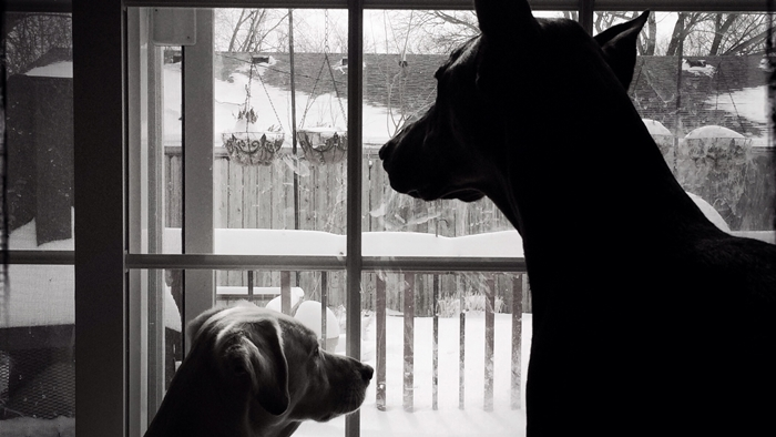 Keeping Your Dog Inside—But Active During Winter