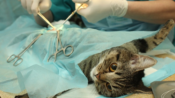 Preparing Your Pet For Surgery