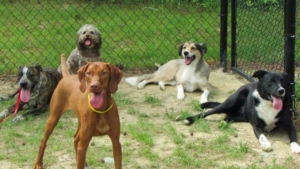 doggy daycare chapel hill pittsboro carrboro