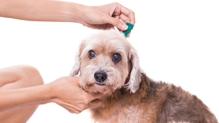 Importance of Heartworm, Flea and Tick Prevention Even in Winter