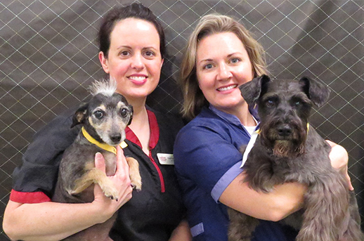 Dogwood Vet Hospital Pet Spa Team